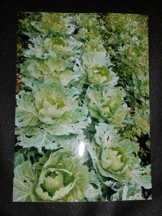 自然栽培「無農薬」野菜が。_a0125419_1516082.jpg