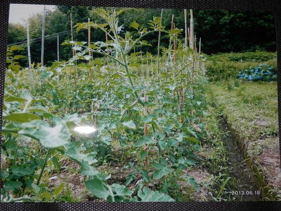 自然栽培「無農薬」野菜が。_a0125419_15182519.jpg