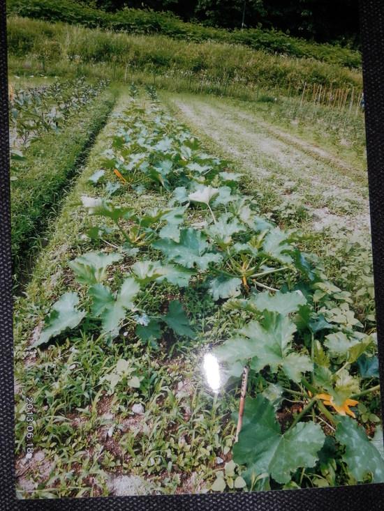 自然栽培「無農薬」野菜が。_a0125419_1519721.jpg