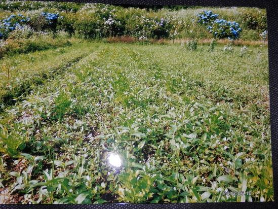 自然栽培「無農薬」野菜が。_a0125419_15201263.jpg