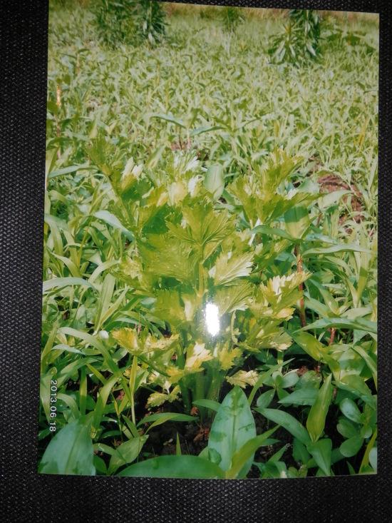 自然栽培「無農薬」野菜が。_a0125419_1521554.jpg