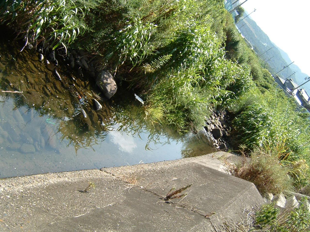 淡輪漁港池のメダカ_c0239329_16451874.jpg