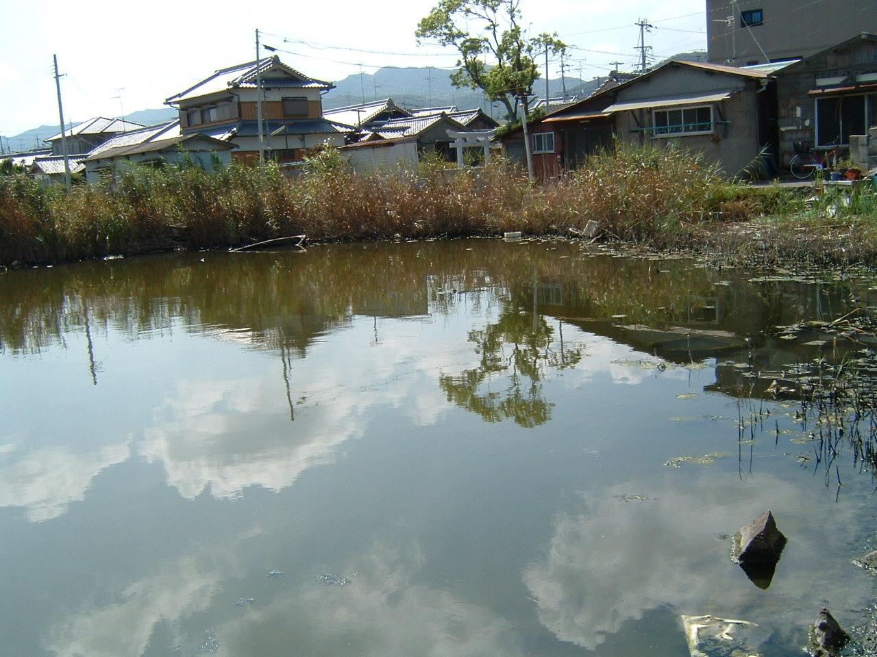 淡輪漁港池のメダカ_c0239329_16453687.jpg
