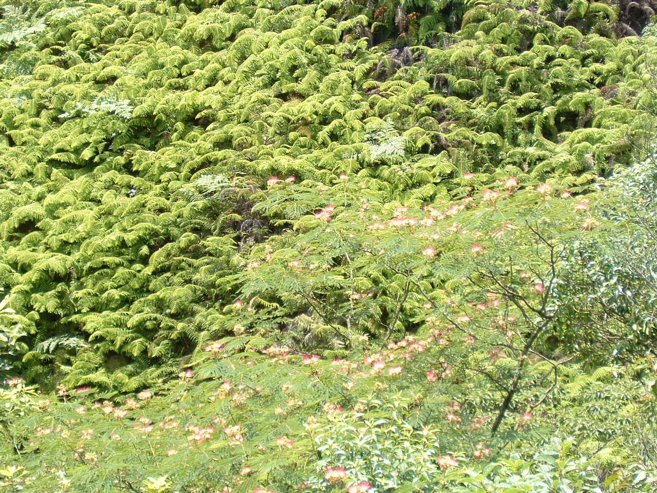 自然散策会:草刈り_c0239329_1805249.jpg