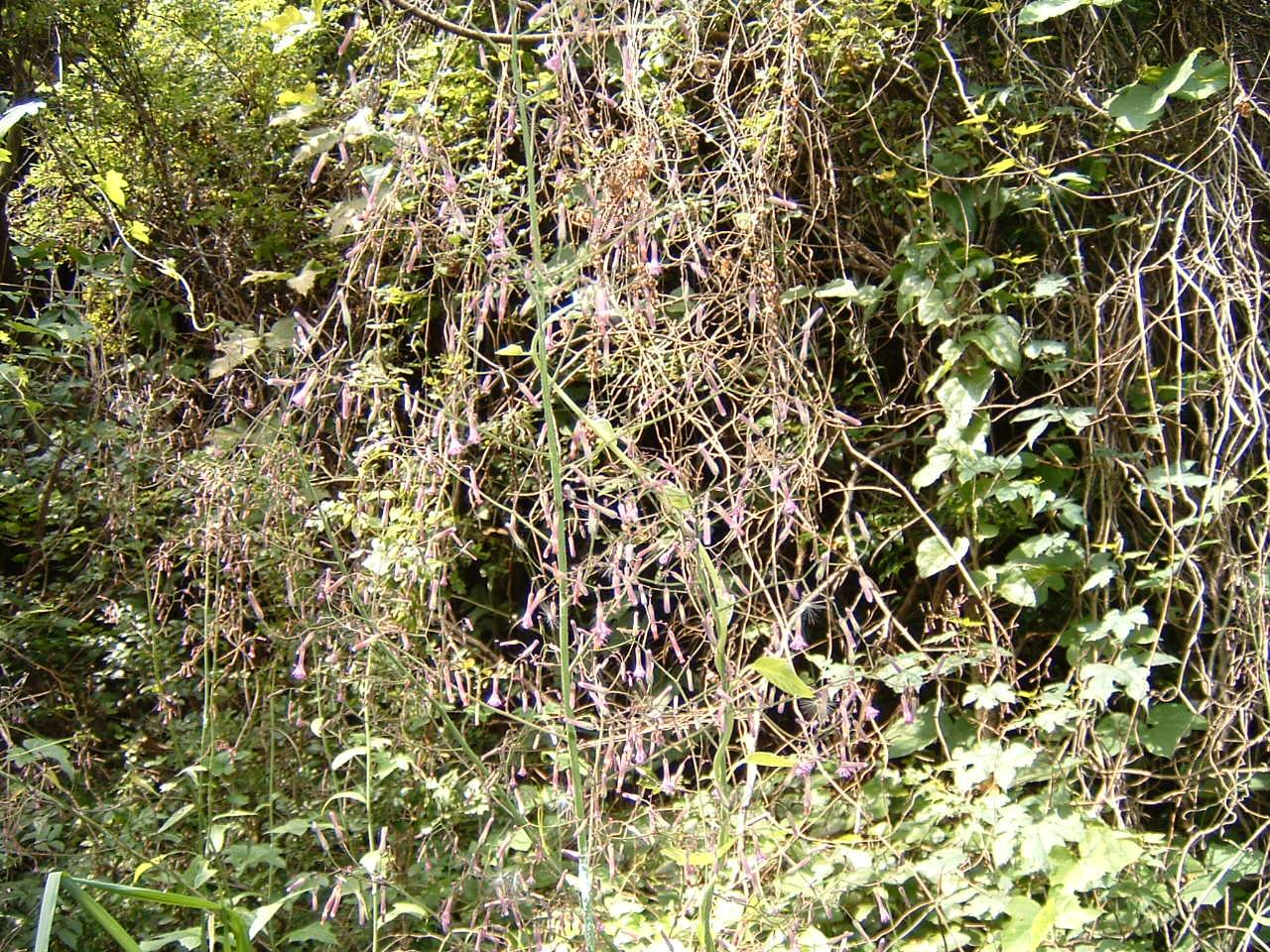 自然散策会:草刈り_c0239329_1854490.jpg