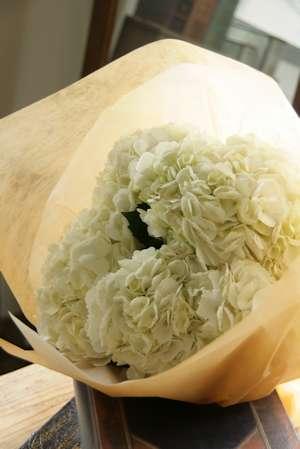 WHITE&GREEN_d0086634_16165710.jpg