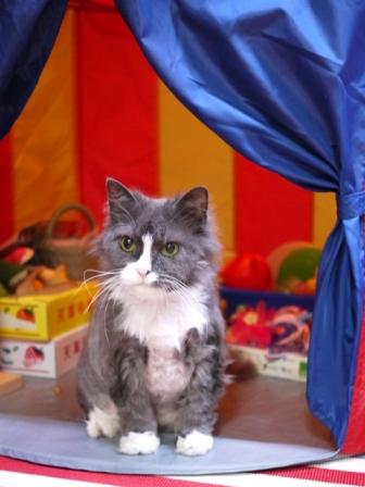 猫のお友だち モアちゃんココくん編。_a0143140_17501883.jpg