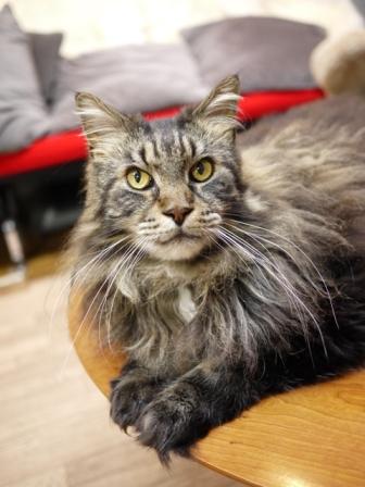 猫のお友だち モアちゃんココくん編。_a0143140_17515777.jpg