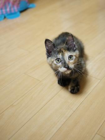 猫のお友だち ようちゃん編。_a0143140_17583311.jpg
