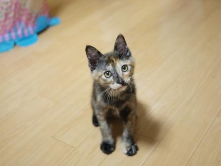 猫のお友だち ようちゃん編。_a0143140_1758654.jpg