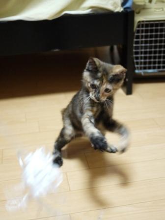 猫のお友だち ようちゃん編。_a0143140_17593368.jpg