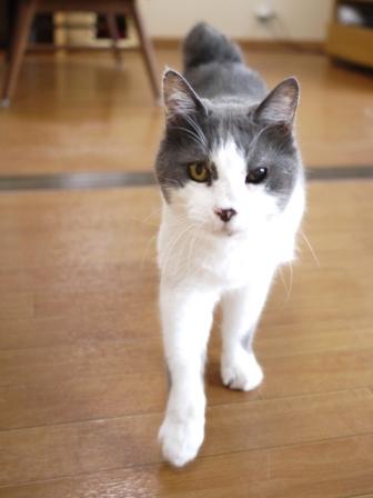 猫のお友だち ララくんショコラくん編。_a0143140_18205679.jpg