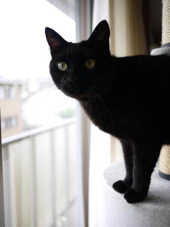 猫のお友だち ララくんショコラくん編。_a0143140_18212295.jpg