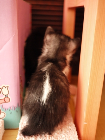 こくぅ猫 みるきぃ編。_a0143140_21131423.jpg
