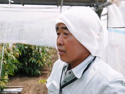 樹上完熟アップルマンゴー 煌(きらめき)の収穫!!_a0254656_18532085.jpg