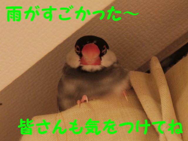 b0158061_2048427.jpg