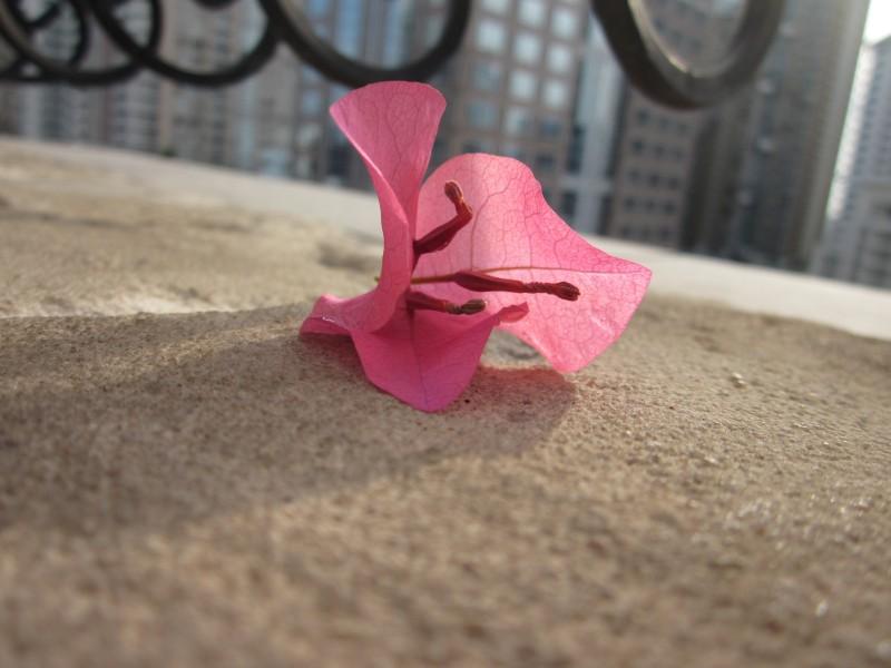 Pink  Pink  Pink_d0103566_1112666.jpg