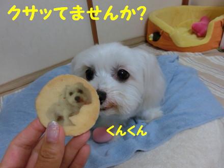 b0193480_1432319.jpg