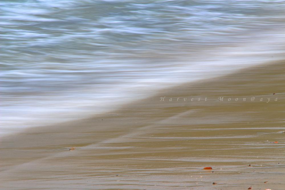 Wave_b0208495_19563665.jpg