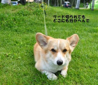 歌才オートキャンプ場(1日目)_f0212597_1448472.jpg