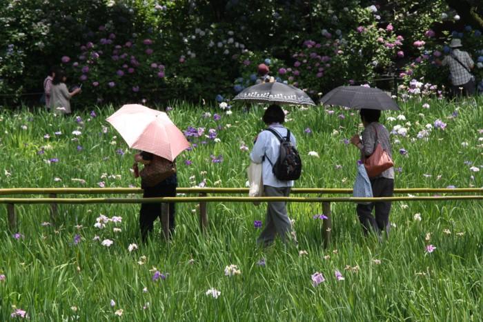 紫陽花を愛でる人もお洒落して_f0055131_17162159.jpg