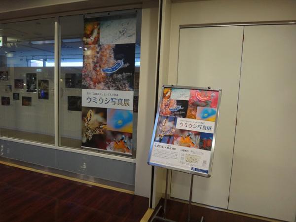海遊館のウミウシ写真展 会場風景1_c0193735_23143746.jpg