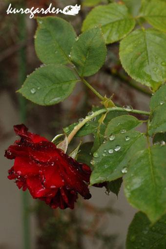 雨の日_e0119151_16453234.jpg
