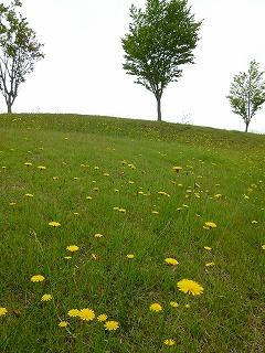 FUKUSHIMAその3  夏のレジーナの森②_a0165160_13504863.jpg