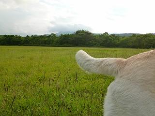 FUKUSHIMAその2  夏のレジーナの森①_a0165160_9202049.jpg