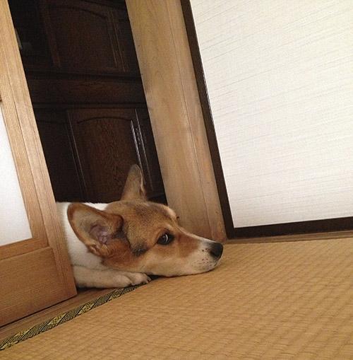 和室と犬_b0156872_1823750.jpg