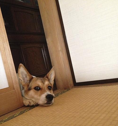 和室と犬_b0156872_1824941.jpg