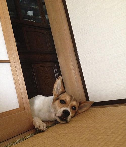 和室と犬_b0156872_1831557.jpg