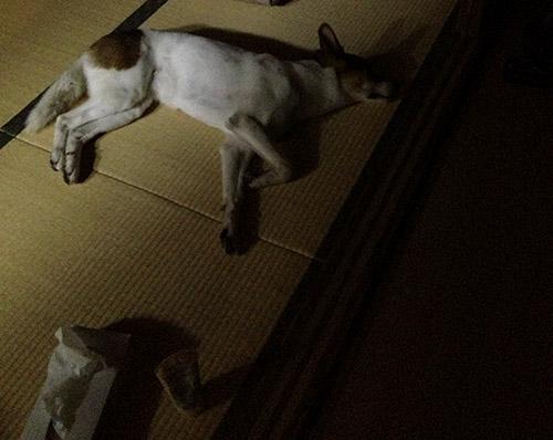 和室と犬_b0156872_1832780.jpg