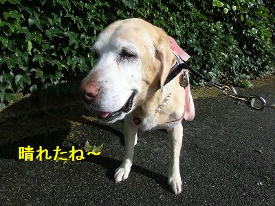 美容院と車椅子のお話_e0222588_1545085.jpg