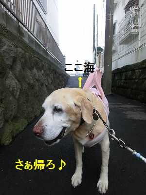美容院と車椅子のお話_e0222588_1581419.jpg