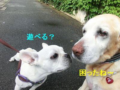 美容院と車椅子のお話_e0222588_1583620.jpg