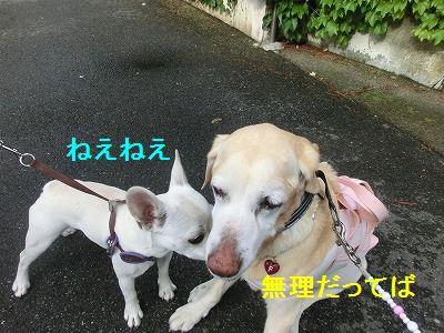 美容院と車椅子のお話_e0222588_1584667.jpg