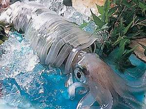 【タイムセール限定】 嬉しい特典付き 泳ぎイカ懐石_d0135908_14205818.jpg