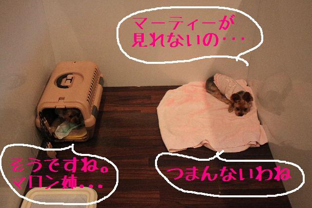 b0130018_022132.jpg