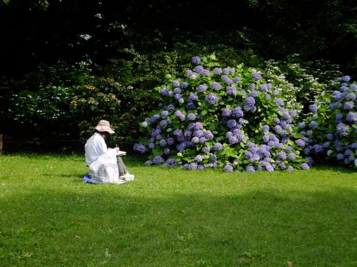 紫陽花を描く人撮る人_f0055131_23404297.jpg
