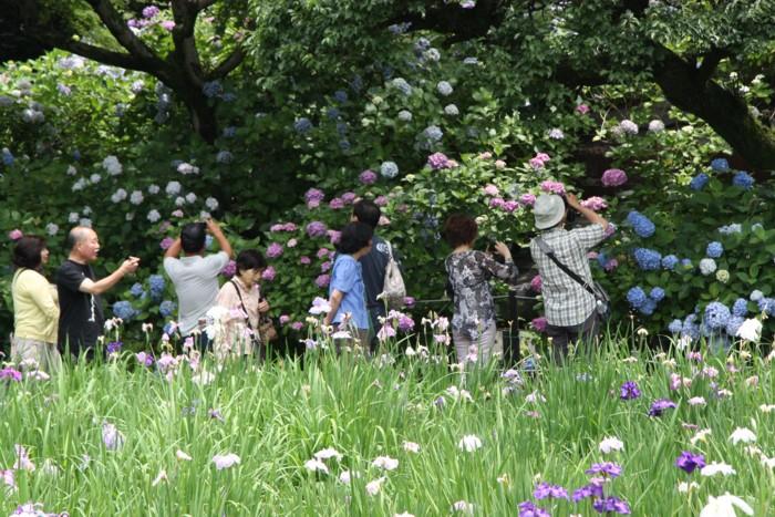 紫陽花を描く人撮る人_f0055131_23404796.jpg