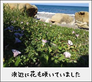 玉川浜と、たまたま玉ねぎ…だったのだ^^_c0259934_1861763.jpg