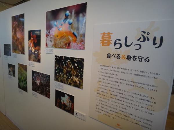海遊館のウミウシ写真展 会場風景2_c0193735_17324823.jpg