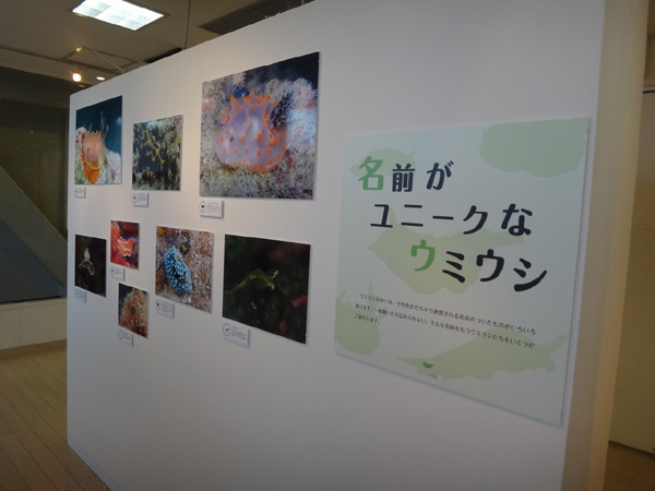 海遊館のウミウシ写真展 会場風景2_c0193735_17332493.jpg