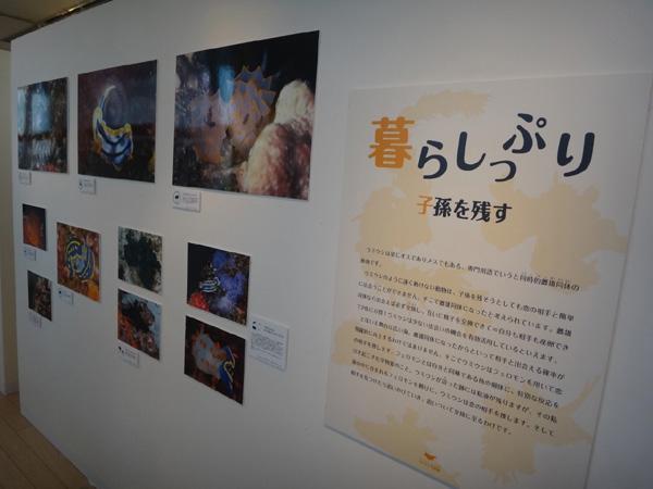 海遊館のウミウシ写真展 会場風景2_c0193735_1733540.jpg