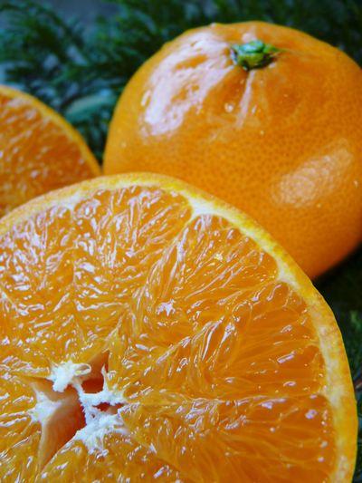 幻の柑橘「せとか」 幻ゆえの手のかかる栽培方法!その1_a0254656_17205517.jpg