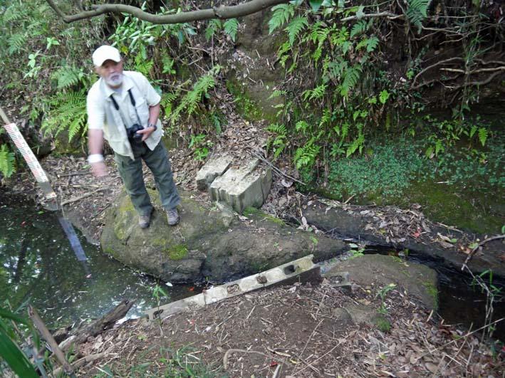 エビモに覆われた谷戸の池、昔日の面影なし(4・23)_c0014967_18463848.jpg