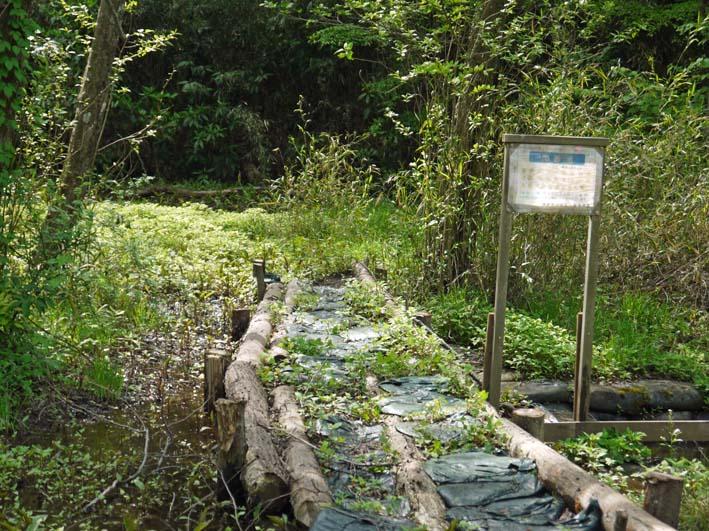 エビモに覆われた谷戸の池、昔日の面影なし(4・23)_c0014967_18531128.jpg