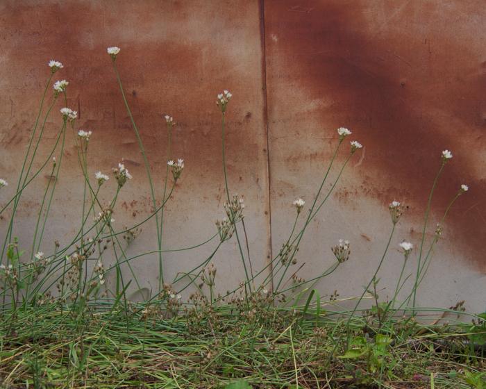 壁の花。_b0022268_22572451.jpg