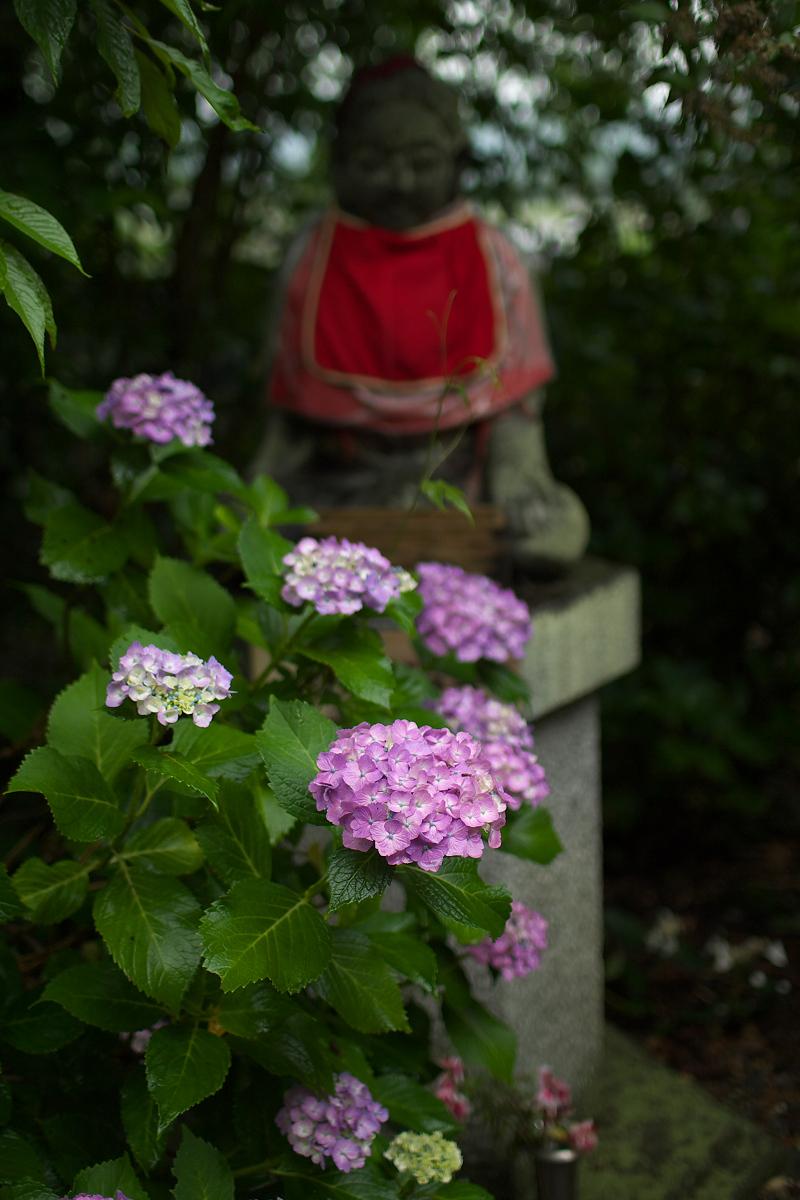 紫陽花 2013 <観音寺> 5_f0021869_22154047.jpg